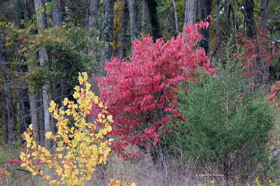 Trees Photograph - Tri Color by Edward Hamilton