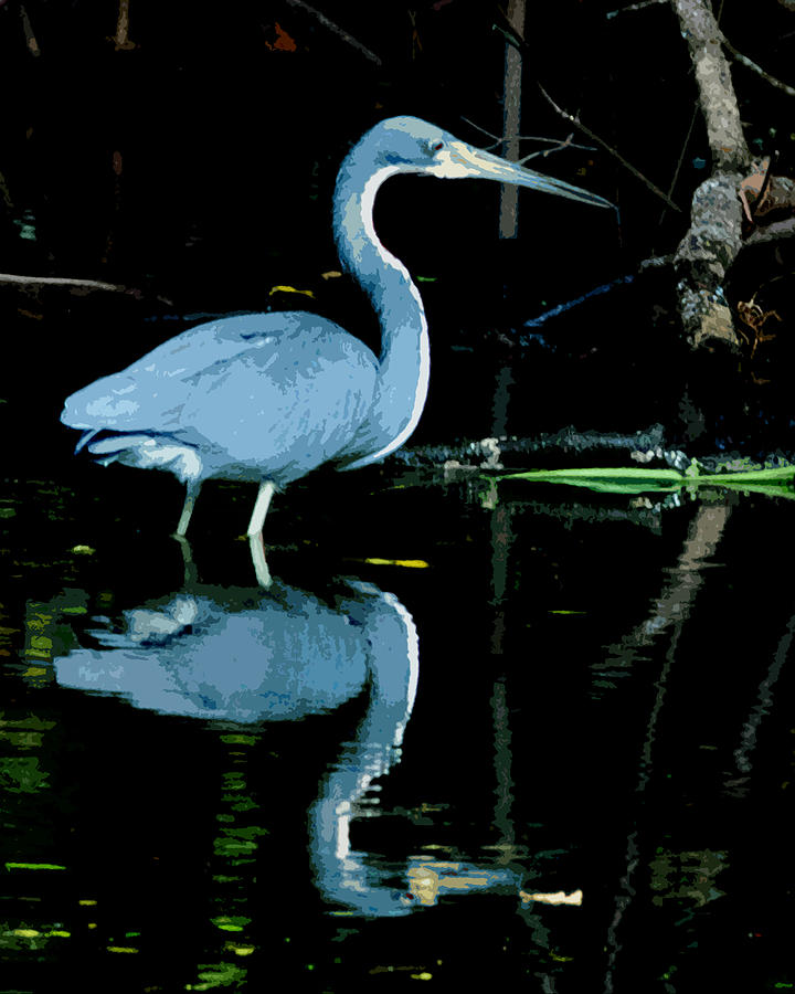Tricolored Heron Digital Art - Tri Colored Mirror Image by Norman Johnson