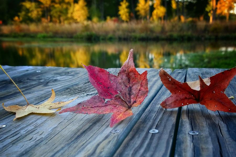 Fall Photograph - Tri Fall by Tommy Wallace