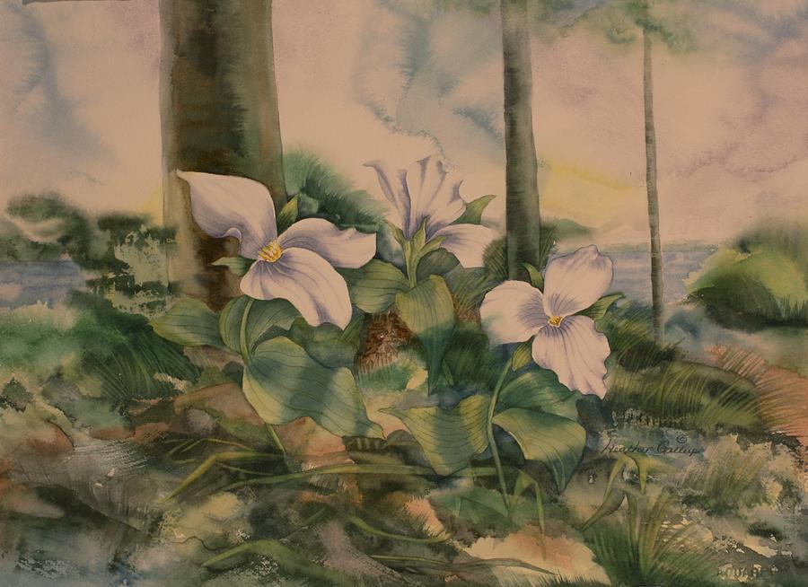 Trillium Painting - Trillium by Heather Gallup