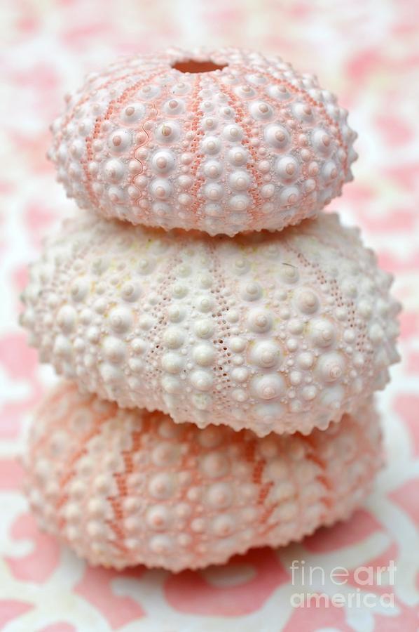 Pink Photograph - Trio Of Pink Sea Urchins by Carol McGunagle