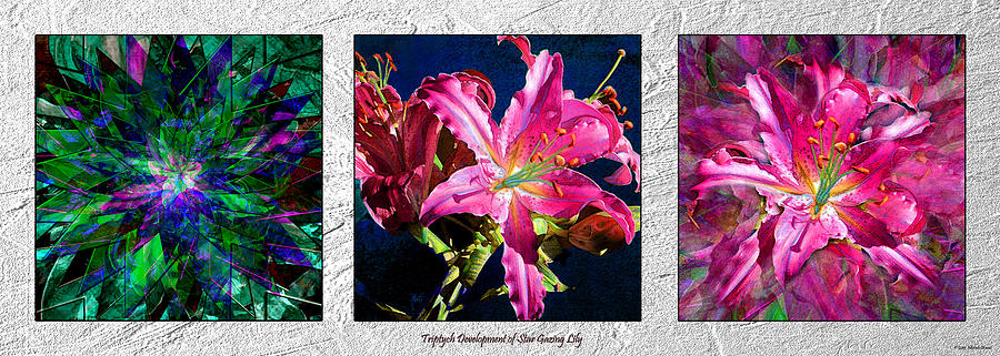 Triptych Development Of Star Gazing Lily Photograph