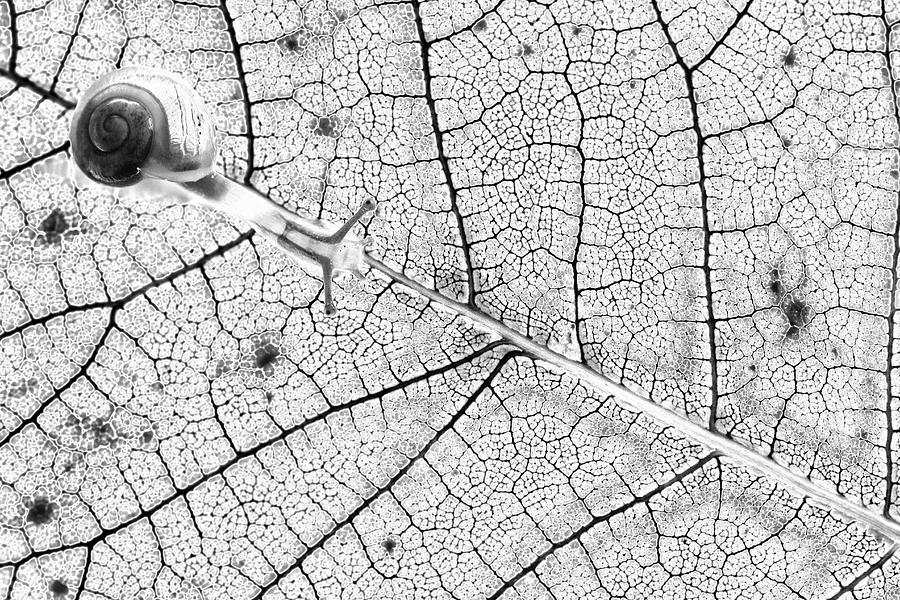 Leaf Photograph - Tr@nsparences by Fabien Bravin