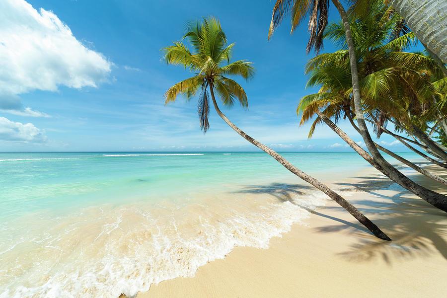 Tropical Beach, Caribbean Photograph by John Harper