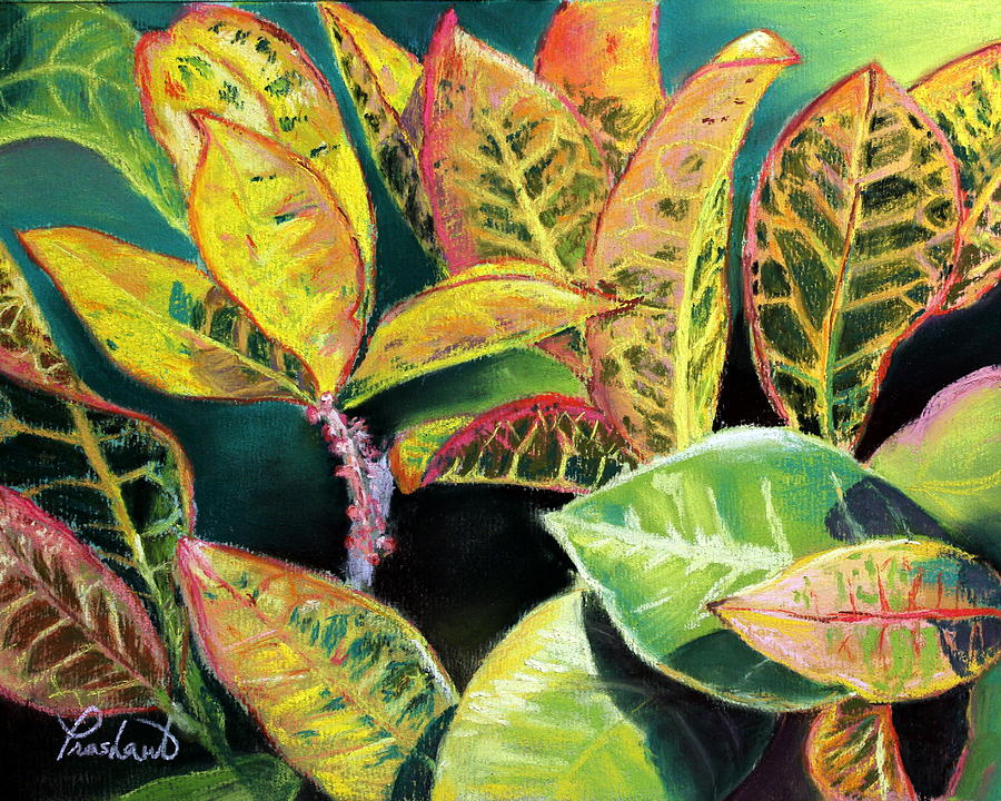 Croton Painting - Tropical Colorful Croton Leaves by Prashant Shah