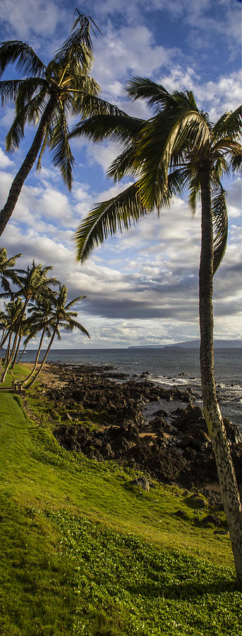 Maui Photograph - Tropical Days by Brad Scott