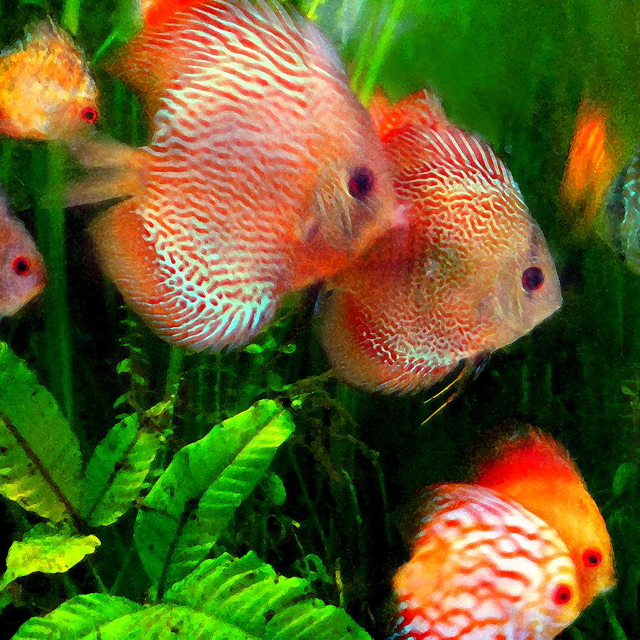 Tropical Discus Fish Group Painting By Amy Vangsgard