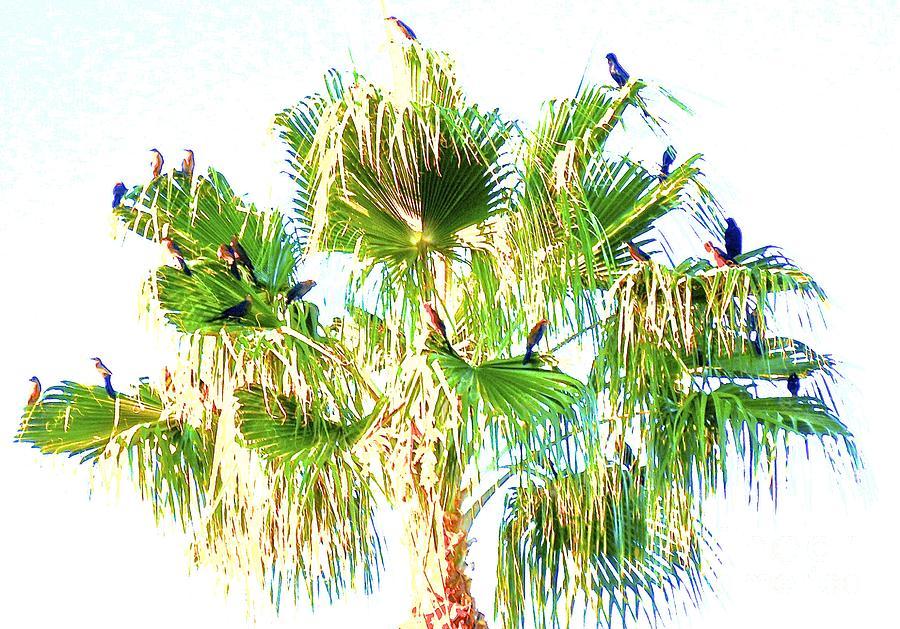 Tropical Dream Digital Art By Margaret Marquez