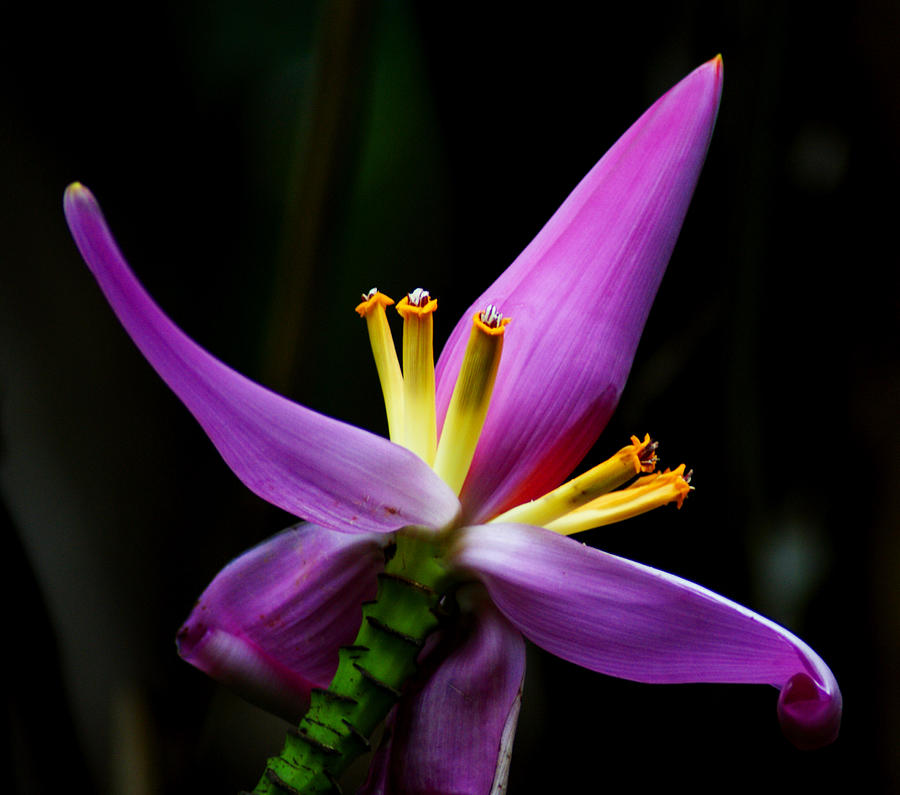 Tropical Flower Photograph By Brian Kerls