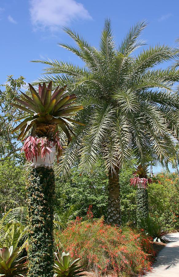 Palm Photograph - Tropical Garden by Kim Hojnacki