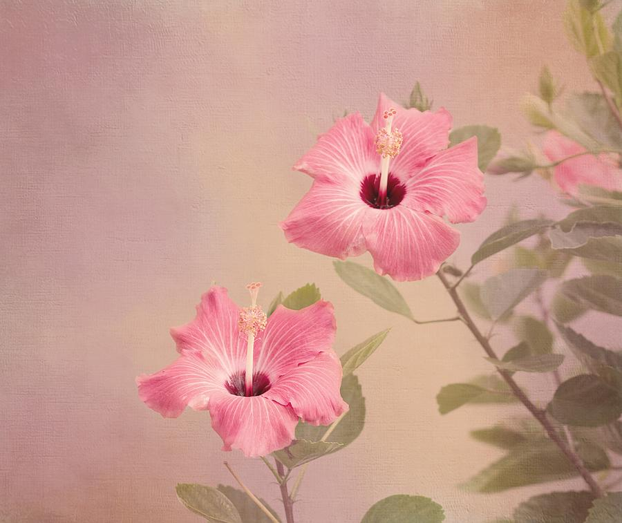 Pink Flower Photograph - Tropical Hibiscus by Kim Hojnacki