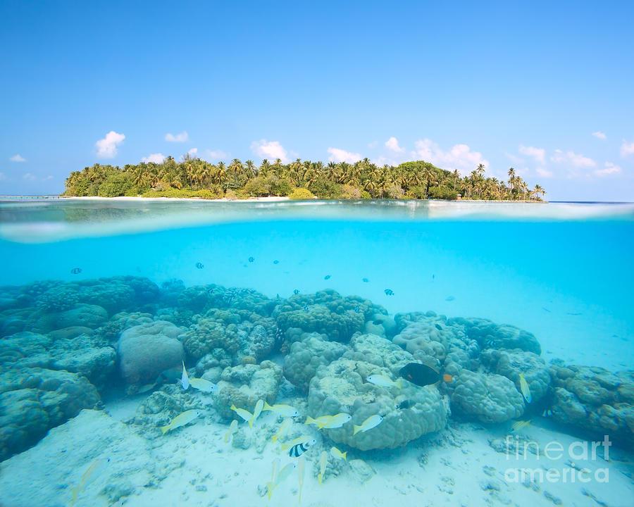 Hd Tropical Island Beach Paradise Wallpapers And Backgrounds: Tropical Island And Underwater Coral Reef