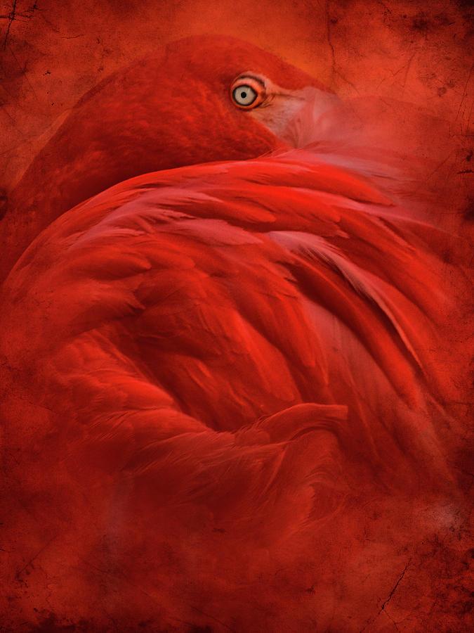 Flamingo Photograph - Tropical by Jeffrey Hummel