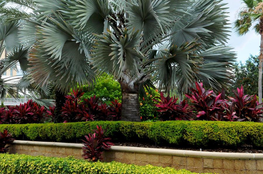 Landscape Photograph   Tropical Landscape By DLL Production Co