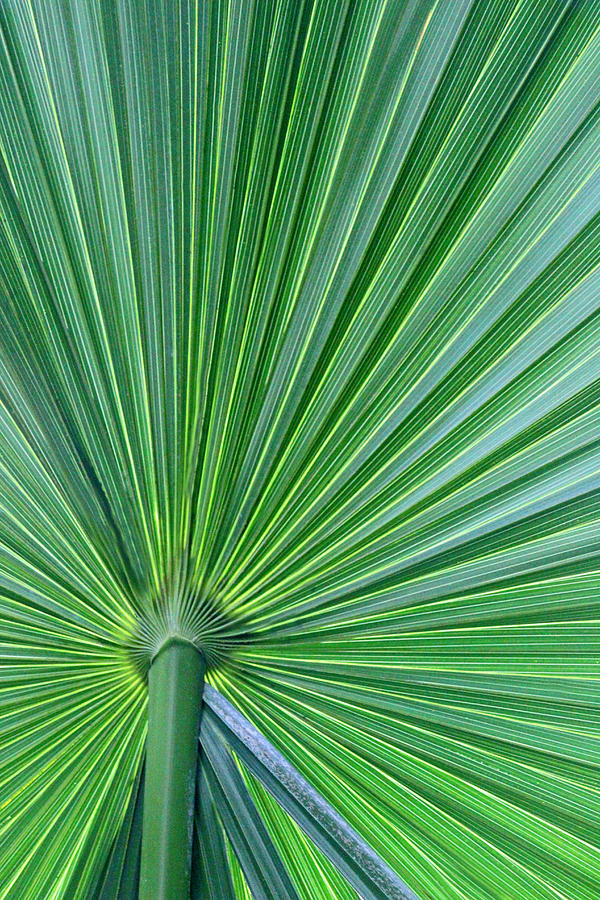 Greenery Photograph - Tropical Leaf by Carolyn Stagger Cokley