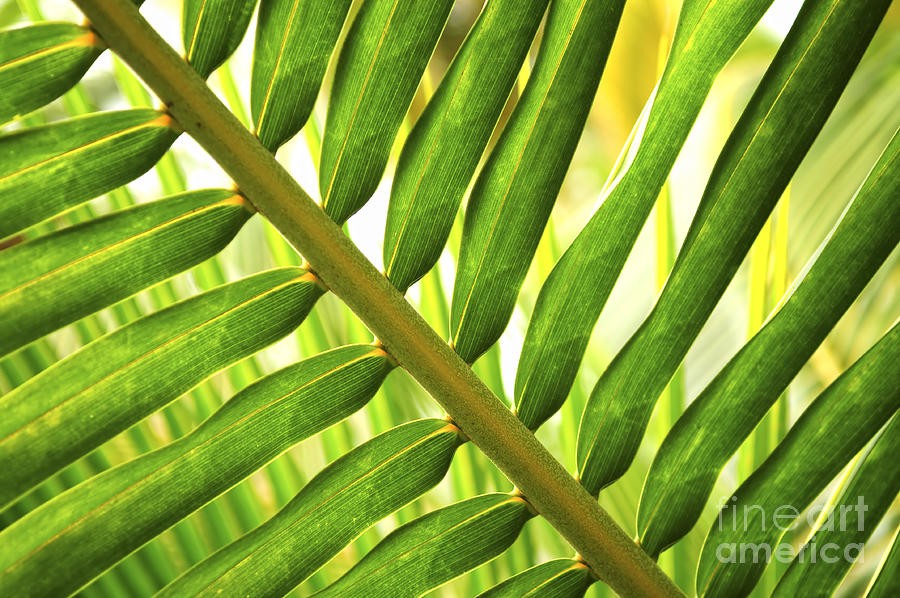 Palm Photograph - Tropical Leaf by Elena Elisseeva