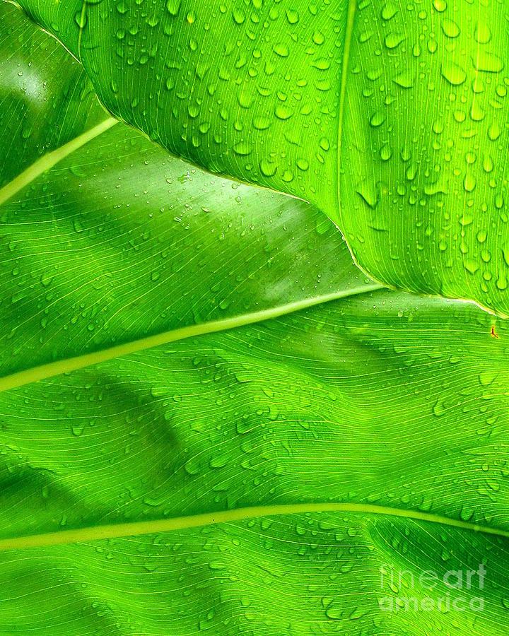 Ranjini Kandasamy Photograph - Tropical Leaves by Ranjini Kandasamy