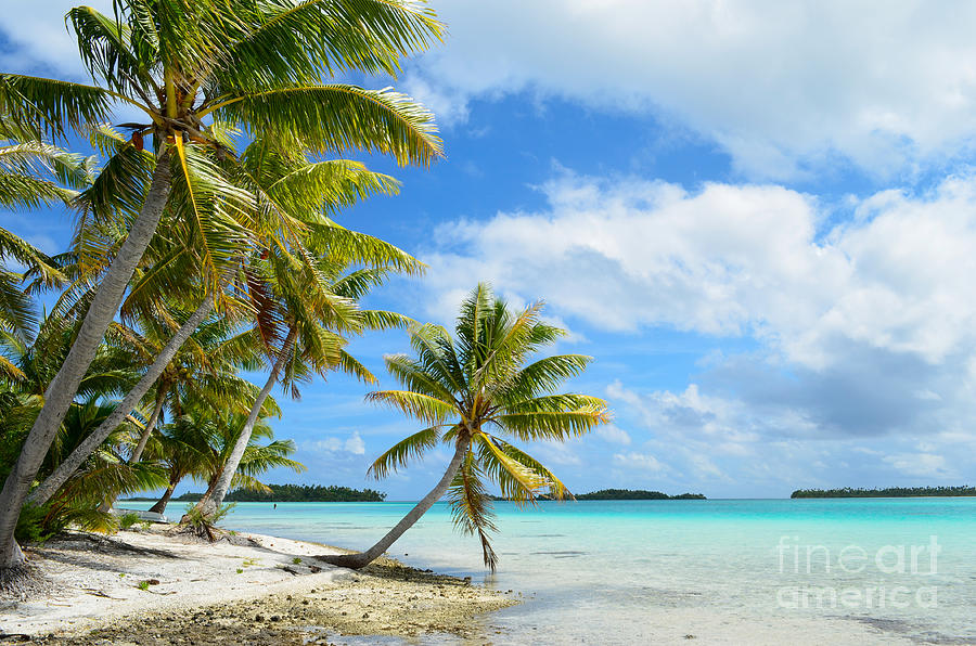 Beach Photograph - Tropical beach with hanging palm trees in the Pacific by IPics Photography