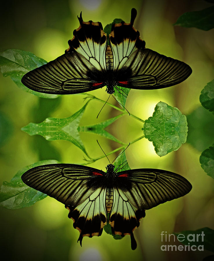 Butterflies Photograph - Tropical Paradise by Inspired Nature Photography Fine Art Photography