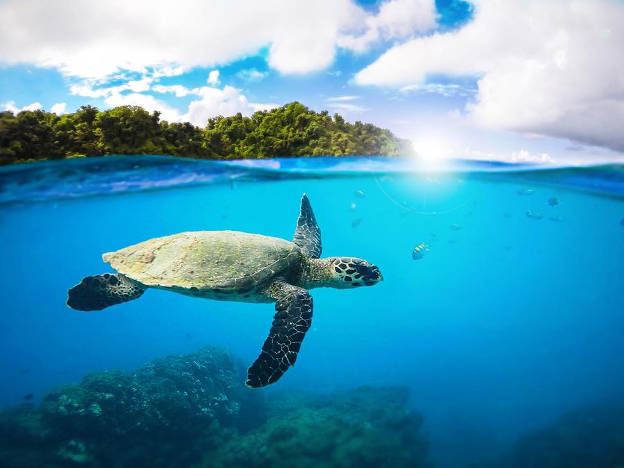 Summer Digital Art - Tropical Paradise by Nicklas Gustafsson