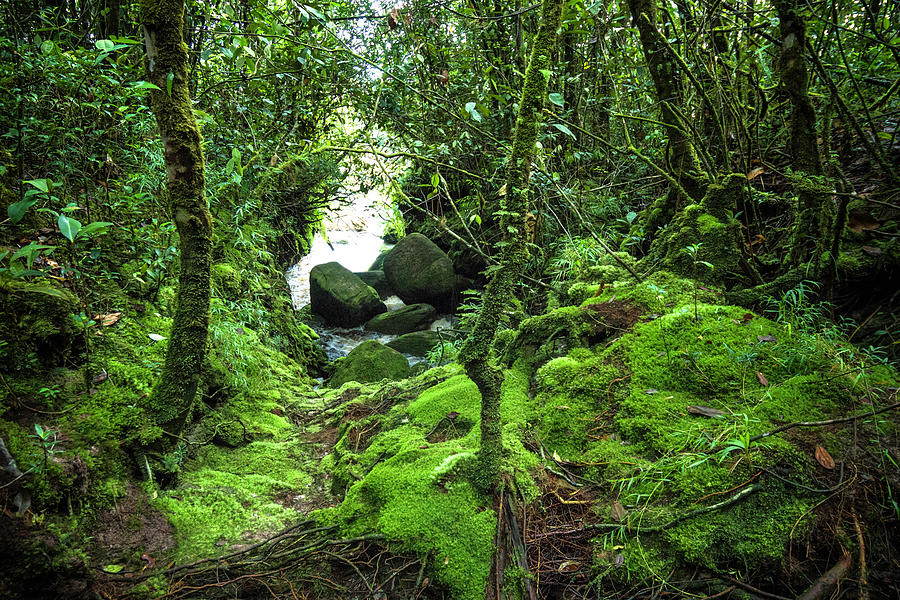 Tropical Rain Forest At Auyantepuy Photograph by Apomares