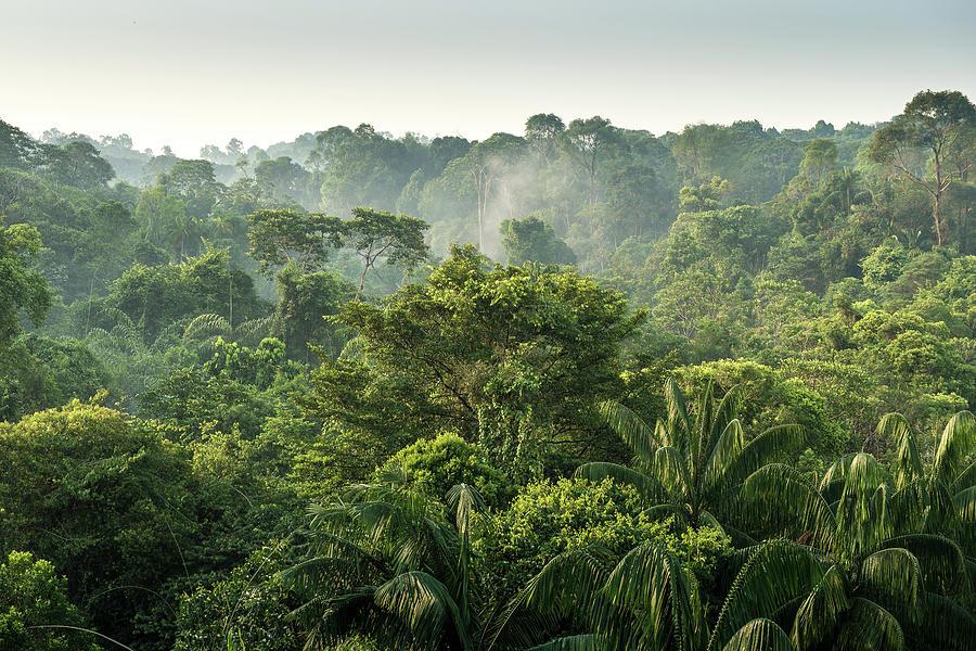 Tropical Rainforest Photograph by Chanachai Panichpattanakij