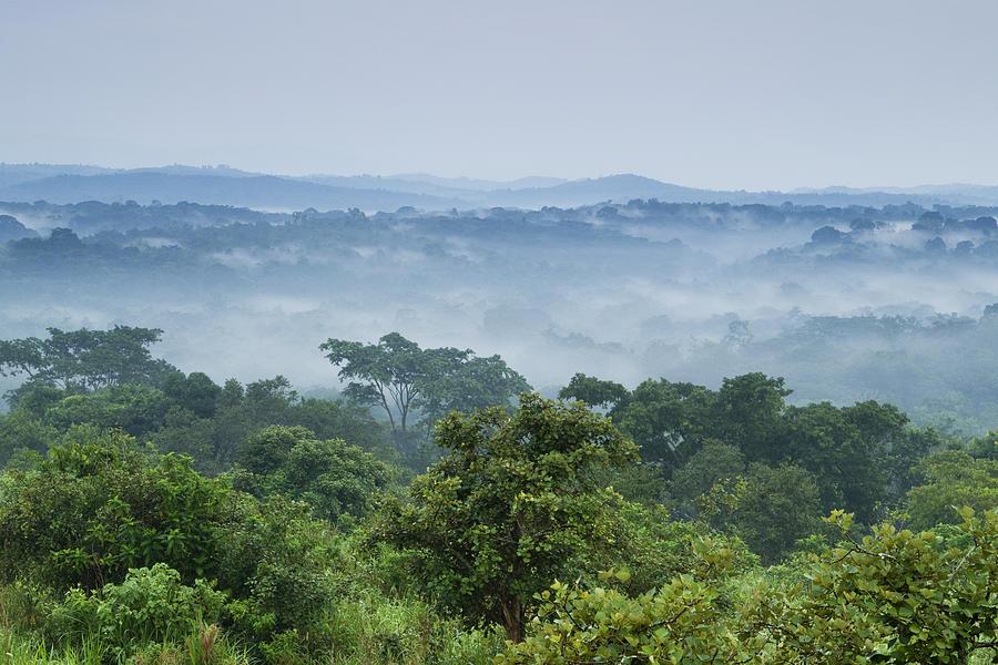 Tropical Rainforest Kibale Np Western Photograph by Sebastian Kennerknecht