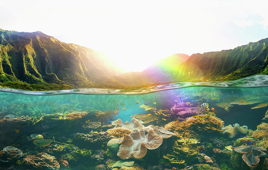 Tropical Reef Under Rural Cliffs Photograph by Colin Anderson Productions Pty Ltd