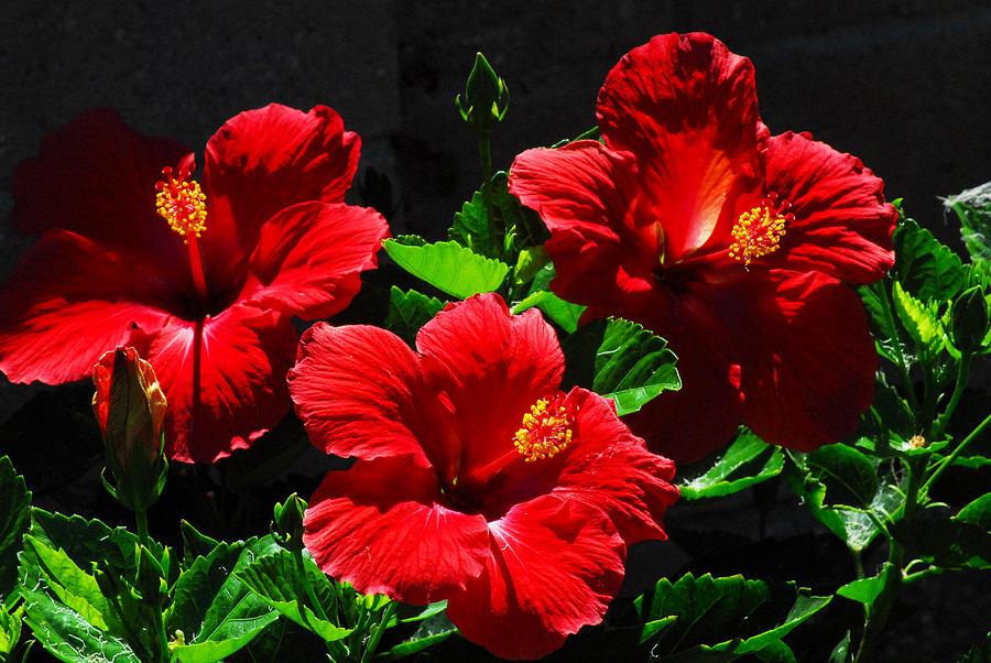 Flowers Photograph - Tropical Trio by Lynn Bauer