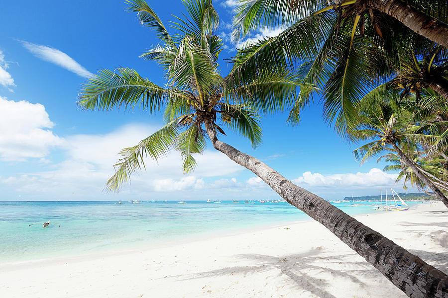 Tropical White Sand Beach Photograph by 35007