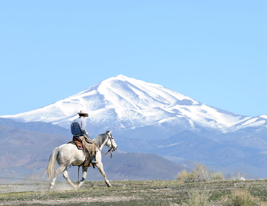 Nevada Photograph - Trotting Out by Lee Raine