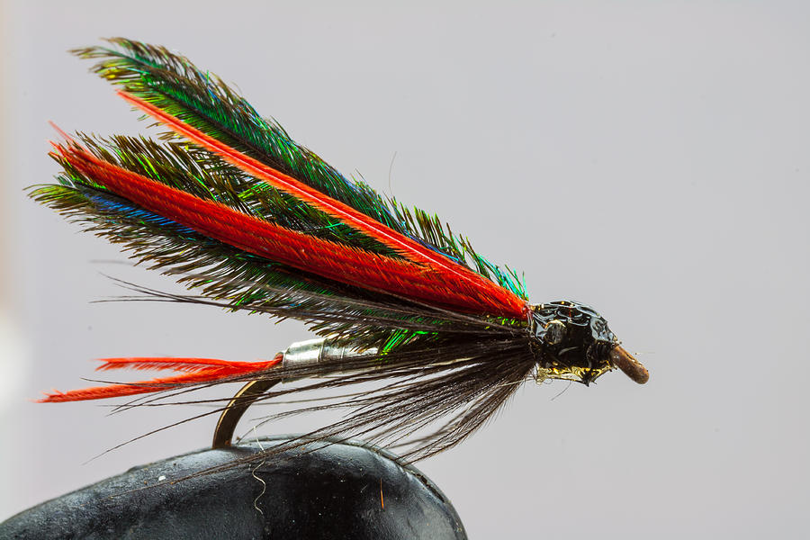 Fishing Photograph - Trout Fly  by Craig Lapsley