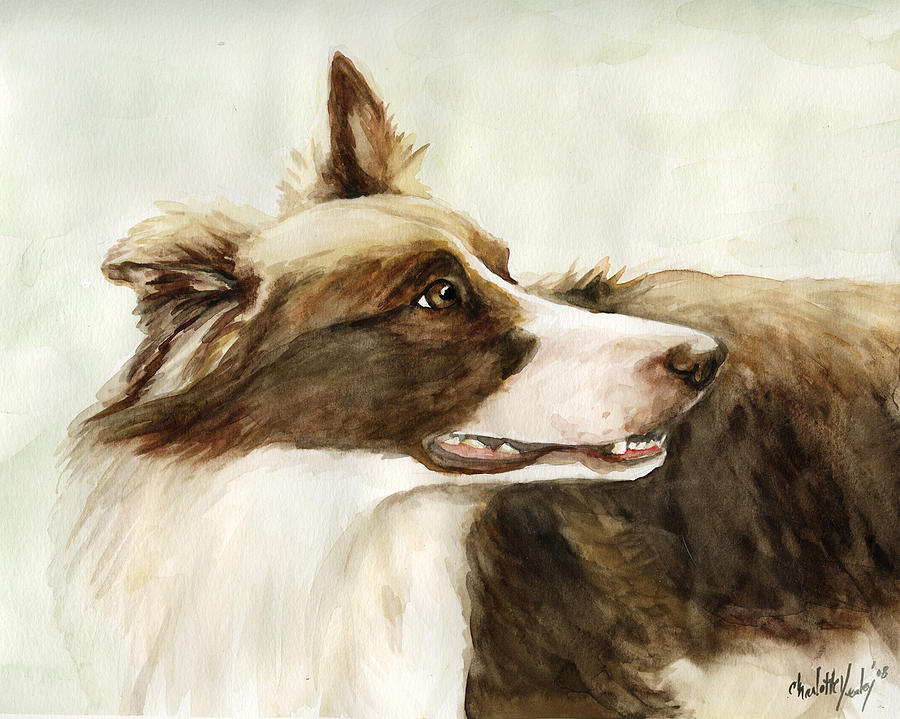 Border Collie Painting - True Devotion by Charlotte Yealey