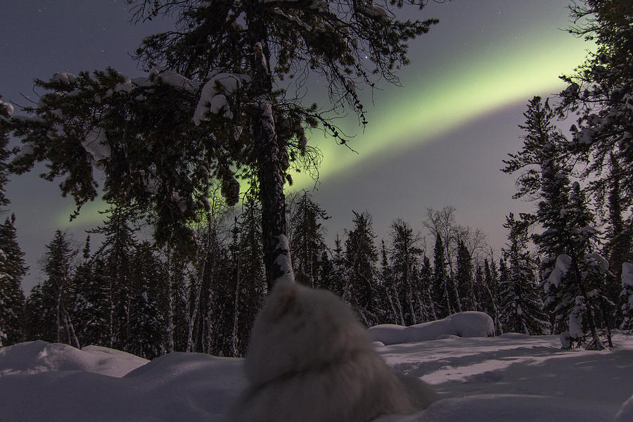 Aurora Borealis Photograph - Truly Northern by Valerie Pond