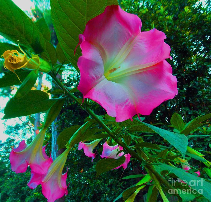 Trumpet Plant Photograph - Trumpet Plant by Annette Allman