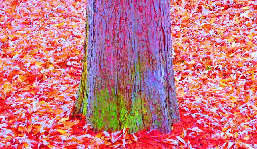 Tree Photograph - Truncate by Ann Johndro-Collins