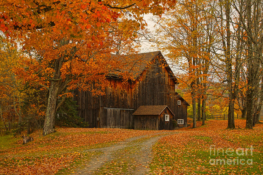 Barn Photograph - Tucked In The Trees by Deborah Benoit