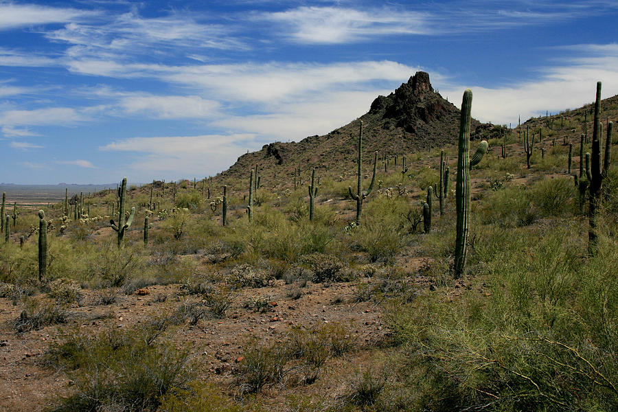 Landscape Photograph - Tucson Catci by Scott Cunningham