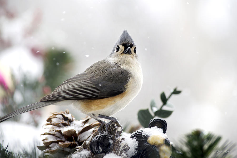 Bird Photograph - Tufted Titmouse In The Snow by Christina Rollo
