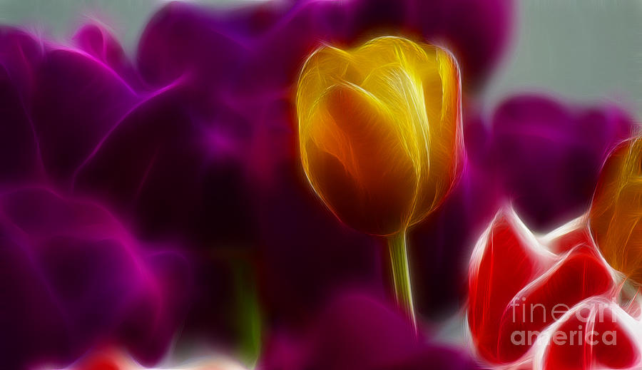 Tulip Photograph - Tulip-6983 by Gary Gingrich Galleries