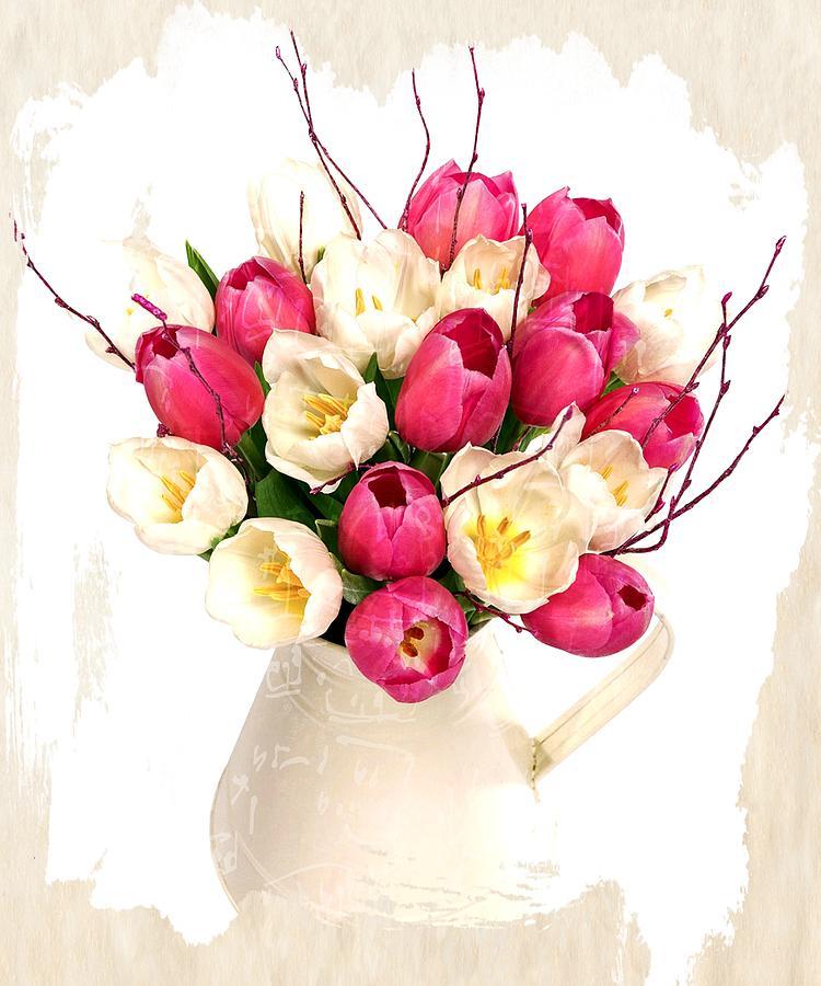 Tulips Photograph - Tulip Blooms by Debra  Miller