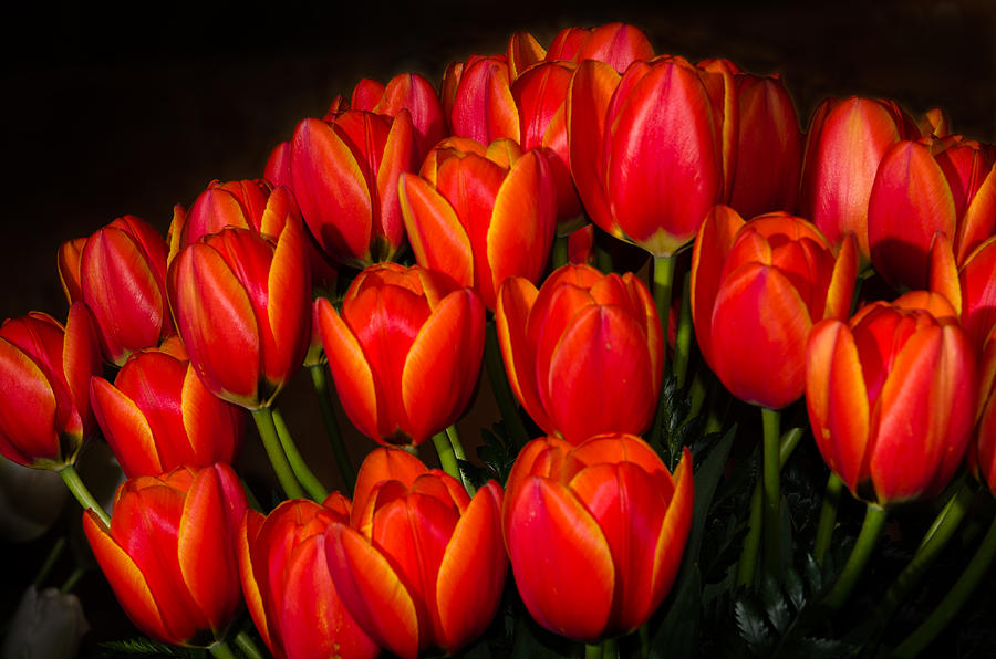 Tulips Photograph - Tulip Bouquet by Brian Xavier