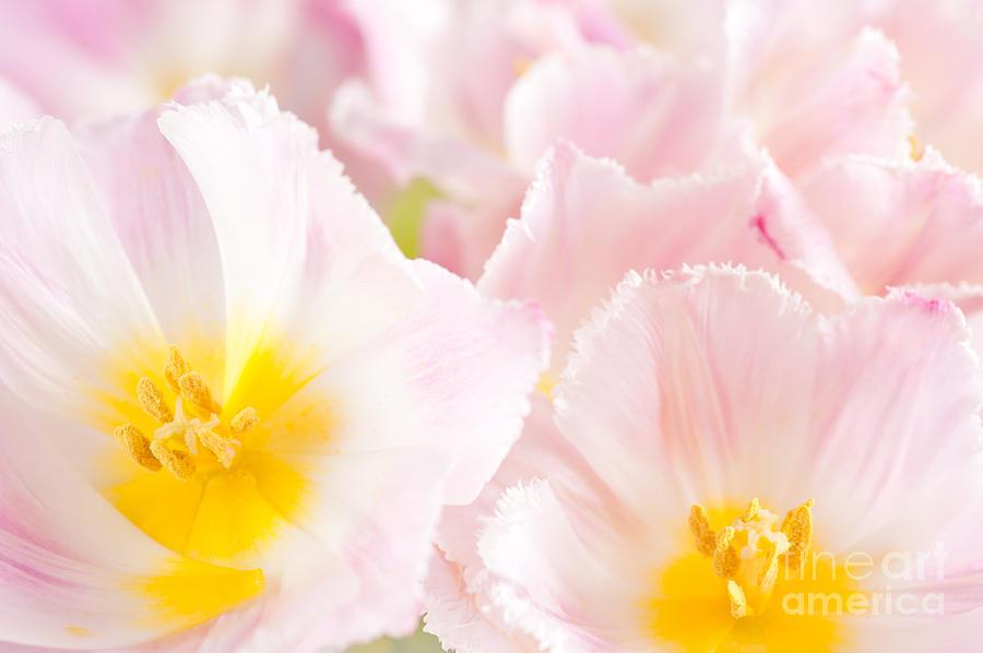 Subtle pink tulip macro inside  by Arletta Cwalina