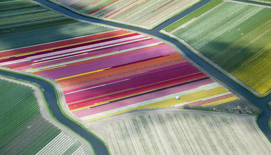 Tulip Fields, Aerial View, South Photograph by Frans Sellies