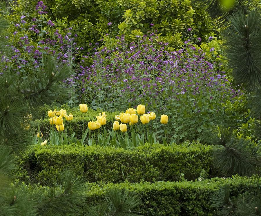 Frank Tschakert Photograph - Tulip Garden by Frank Tschakert