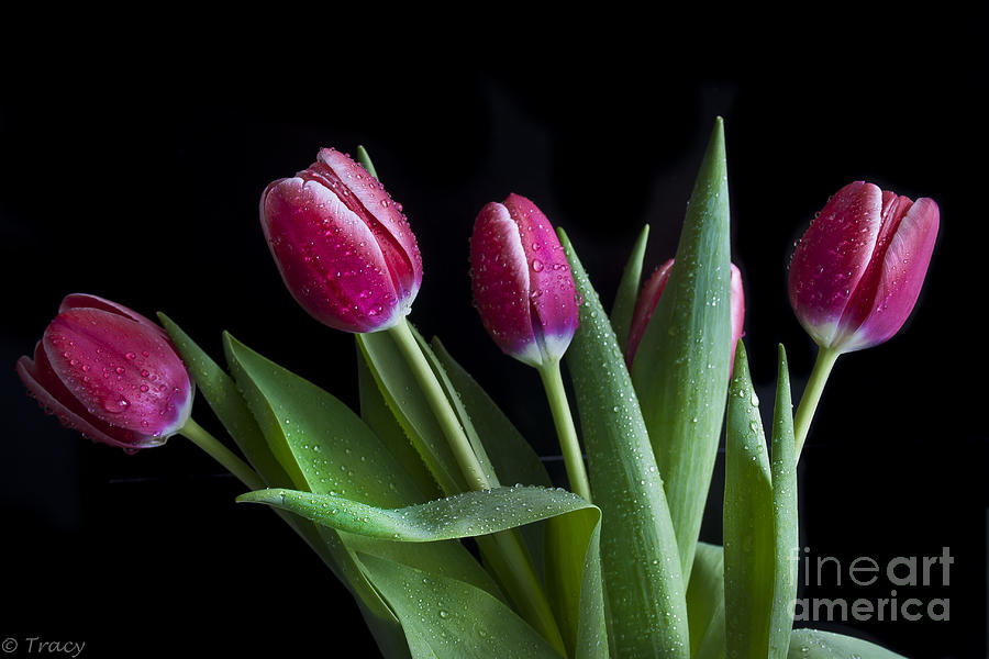 Tulips Photograph - Tulip Paradise by Tracy  Hall