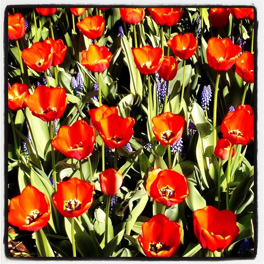 Tulip Patch Photograph by Scott Snizek