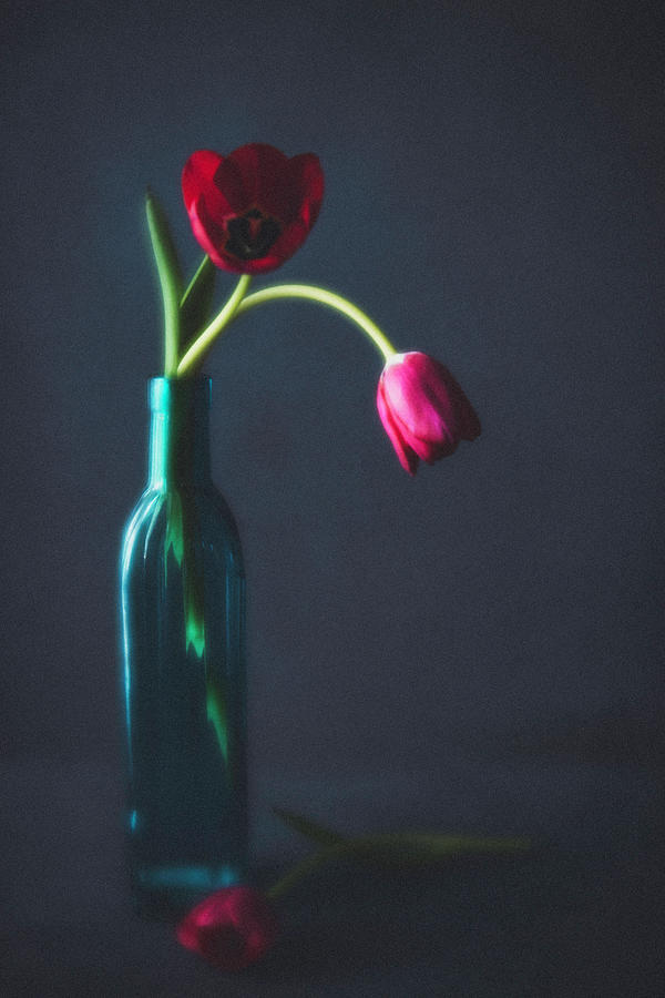 Tulip Still Life For Mothers Day Photograph by Catlane