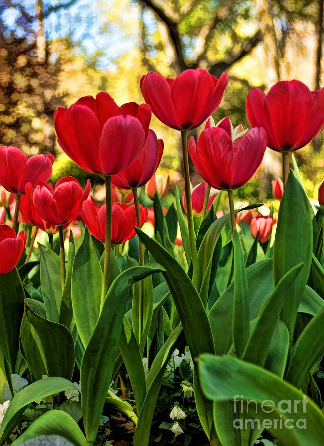 Tulips Photograph - Tulip Time by Peggy Hughes
