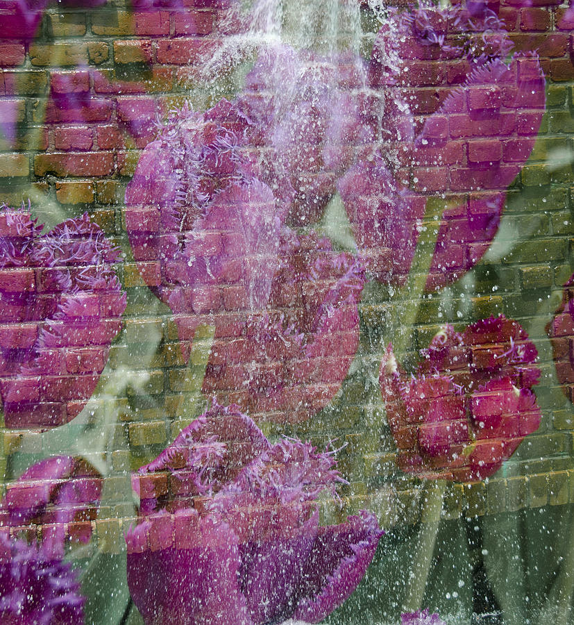 Flowers Photograph - Tulip Waterfalls by Penny Lisowski